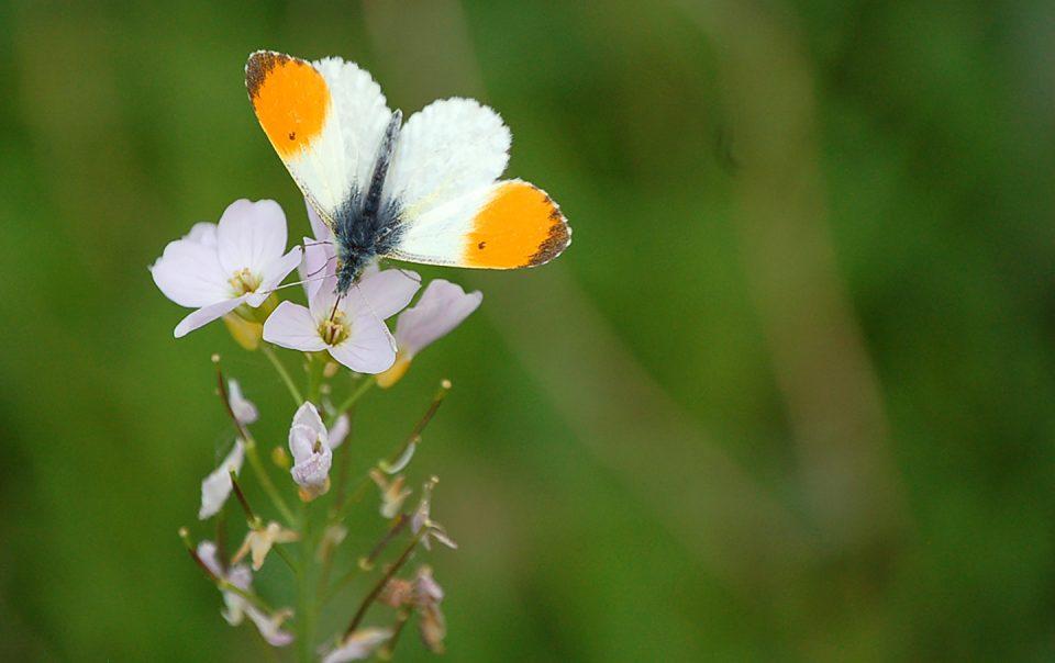 Papillon bis_1440x960